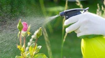 Борьба с болезнями растений
