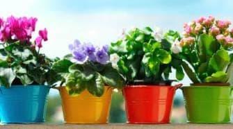 Уход за комнатными растениями основные правила