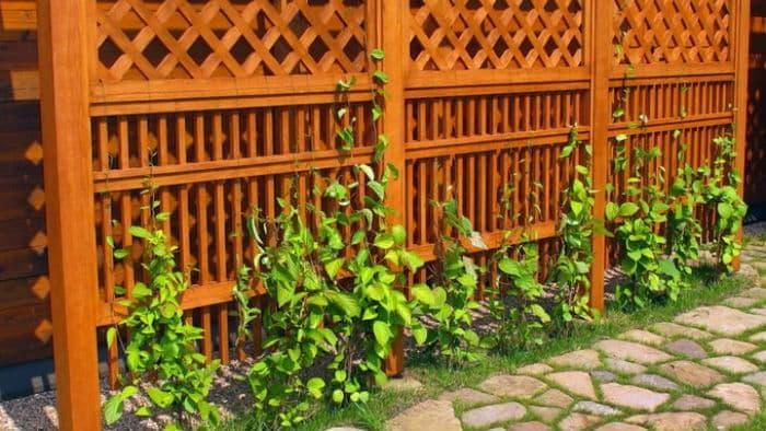 Садовый трельяж для вьющихся растений