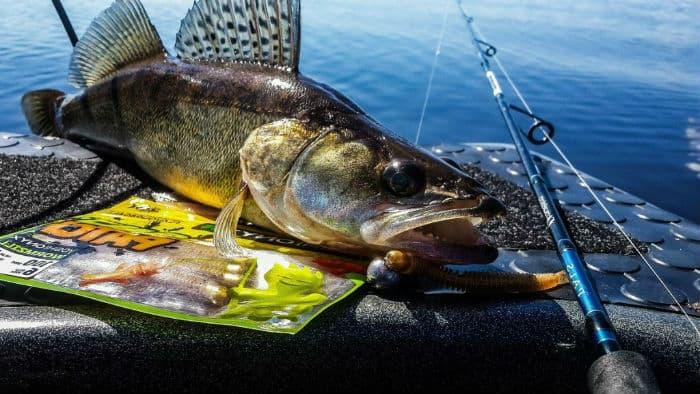 Рыбалка на судака весной